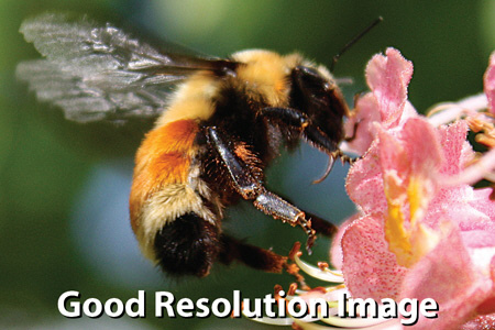 High or Good Resolution Images are best for commercial printing